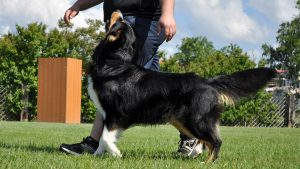 Clicker Training for Dogs Is Gentle, Effective and Fun